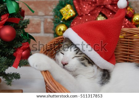 Cute kitten and christmas cap