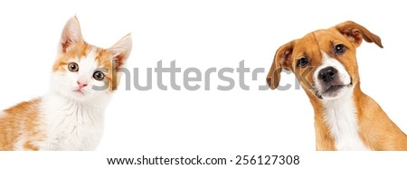 Cute kitten and puppy peeking out from the side of a white banner with room for text - stock photo
