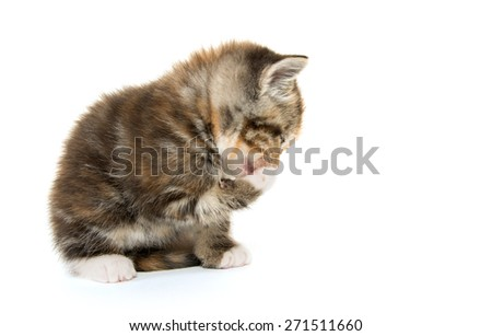 Cute kitten cleaning one of its paws while isolated on white background - stock photo