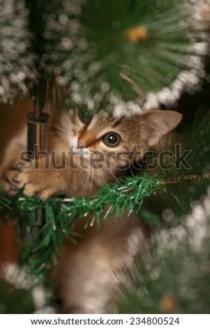 Cute kitten climbing on a new year tree - stock photo