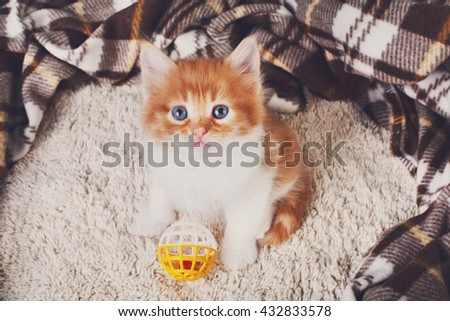 Cute kitten. Ginger kitten with white chest. Long haired red orange kitten sit at brown plaid blanket. Sweet adorable kitten on a serenity blue wood background. Small cat with toy ball. Funny kitten - stock photo