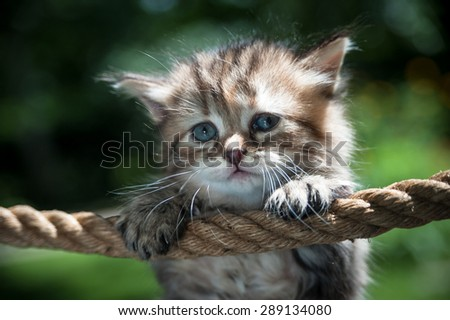 Cute kitten hanging on the rope looking sad - stock photo