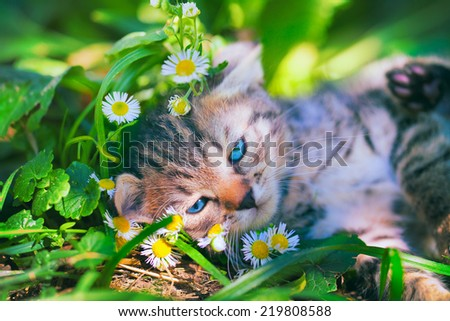 Cute kitten have a rest on the grass - stock photo
