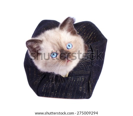 Cute kitten hiding in make up bag isolated on white background - stock photo