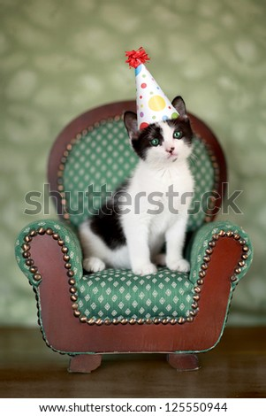 Cute Kitten in a Chair With Birthday Party Hat - stock photo