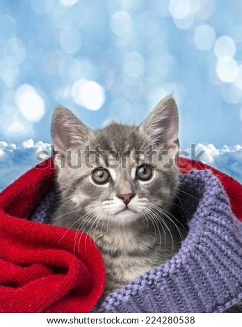 cute kitten in a scarf - stock photo