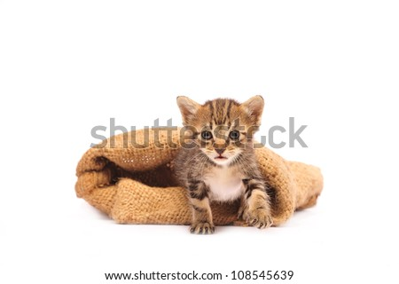 cute kitten in burlap sack on white background