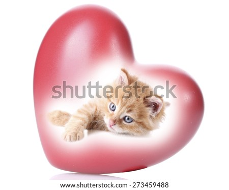Cute kitten in red heart isolated on white - stock photo