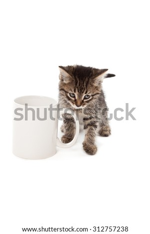 Cute kitten in white cup isolated on white - stock photo