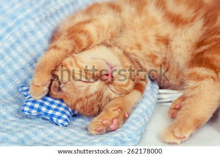 Cute kitten is sleeping  - stock photo