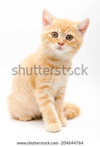 Cute kitten isolated