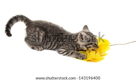 cute kitten isolated on a white background