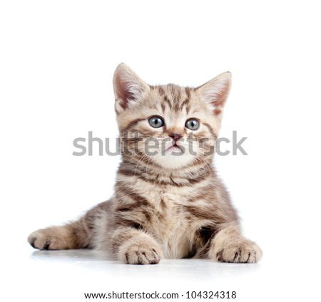 cute kitten isolated on white background - stock photo