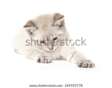 Cute kitten laying down and playing on white background - stock photo