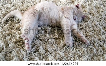 cute kitten laying on carpet - stock photo