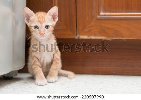 Cute kitten lean on wall. - stock photo