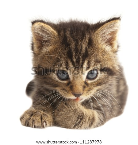 Cute kitten licking its paw on white background - stock photo