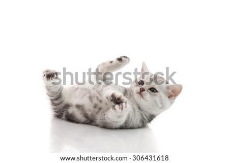 Cute kitten lies on his back and plays on a white background isolated - stock photo