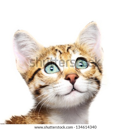 Cute kitten looking up. - stock photo