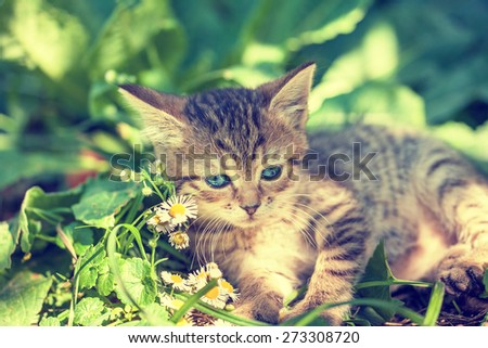Cute kitten lying on the grass