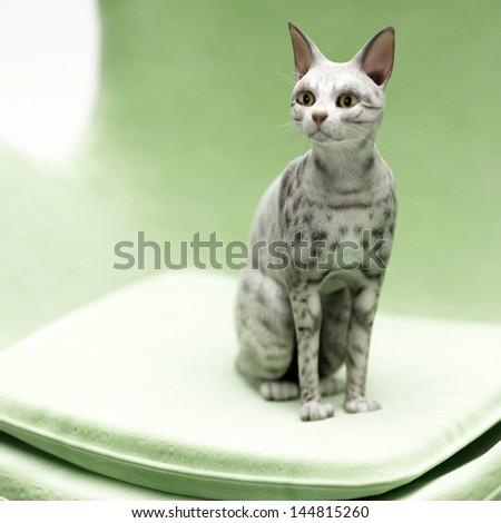 Cute kitten on chair - stock photo