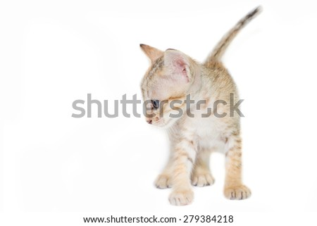 Cute kitten playful on white background. - stock photo