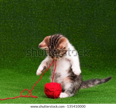 Cute kitten playing red clew of thread on artificial green grass - stock photo