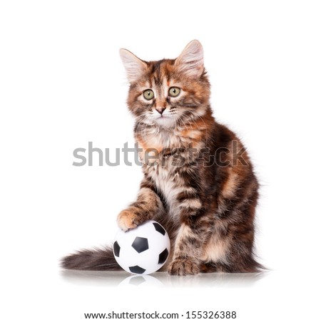 Cute kitten playing soccer ball, isolated on white background  - stock photo