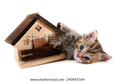 Cute kitten plays with a model house on white background - stock photo