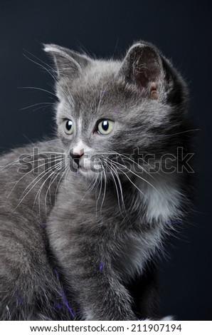 cute Kitten portrait on an isolated black background - stock photo