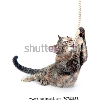 Cute kitten pulling and playing with rope