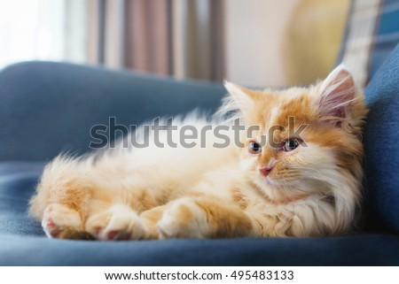 Cute kitten resting on blue sofa at home