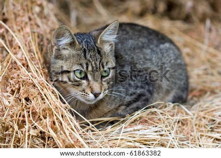 cute kitten sits on straw - stock photo
