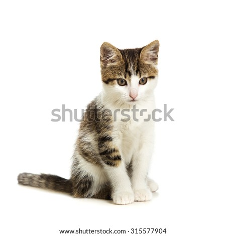 Cute kitten sitting and looking to the side on a white background - stock photo