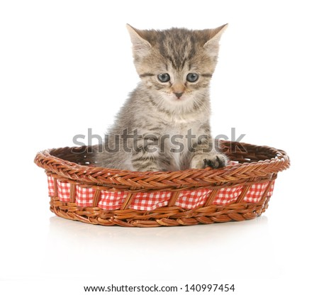 cute kitten sitting in a basket isolated on white background - stock photo