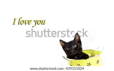 Cute kitten sitting inside in pastel container on white background, i love you card concept - stock photo