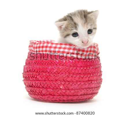 Cute kitten sitting inside of red basket on white background