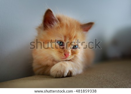 Cute Kitten sitting on the sofa
