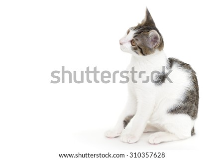 Cute kitten sitting on white background