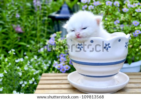 cute kitten sleep in flower pot - stock photo