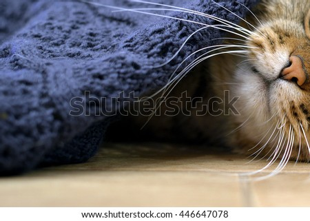 Cute  kitten sleeps under a knitted, soft blanket