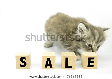 Cute Kitten sniff at cubical block with SALE written on it
