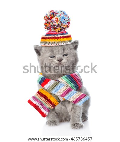 Cute kitten wearing a scarf and warm hat with pompon. isolated on white background
