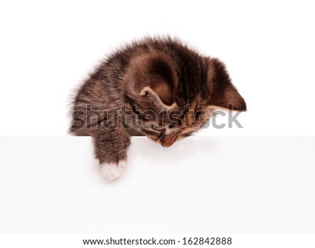 Cute kitten with blank billboard, isolated on white background - stock photo