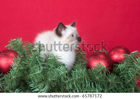 Cute kitten with Christmas decorations on red background - stock photo