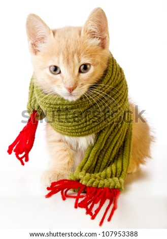 Cute kitten with christmas scarf - stock photo