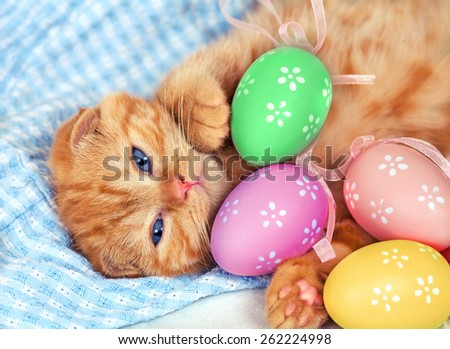 Cute kitten with colored eggs - stock photo