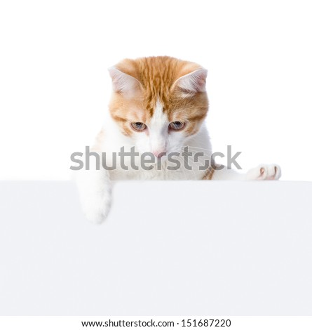 Cute kitten with empty board. isolated on white background - stock photo