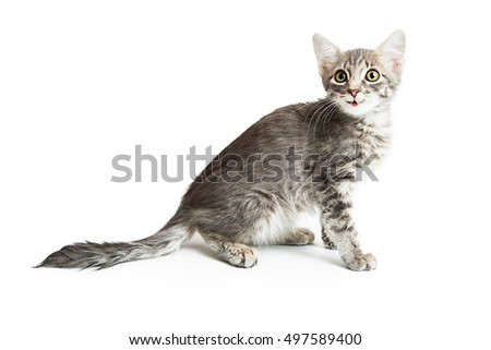 Cute kitten with happy smiling expression sitting to side over white