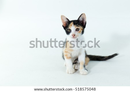 Cute kitten with large paws sitting next to a toy on a white background.